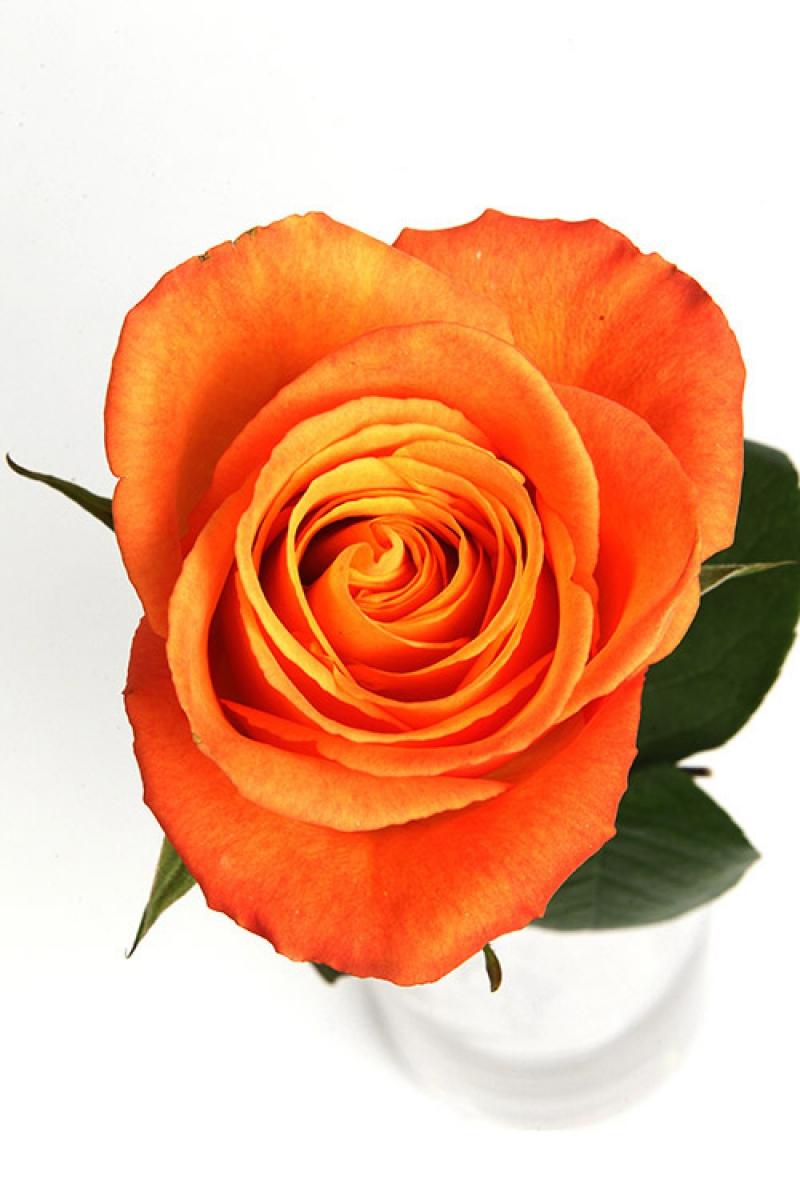 Je T Aime St John Of God Florist